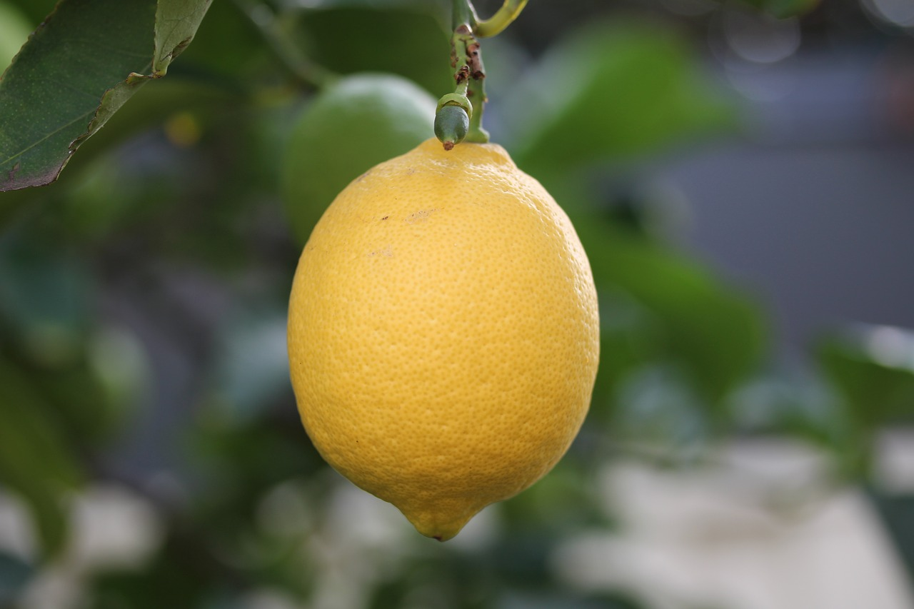 Anchor text for external links can be used like lemons