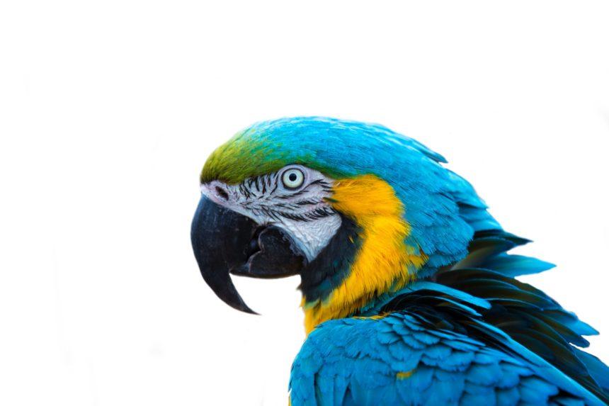 monty python parrot keywords not dead