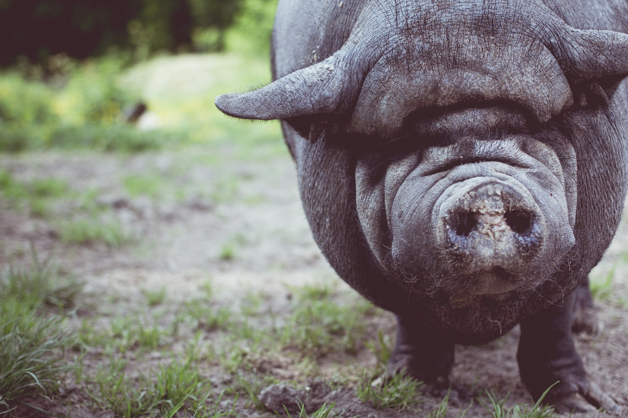 Perfecting technical SEO at expense of content is like putting lipstick on a pig