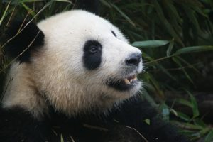 Legal Blog Series Duplicative Content Penalty Panda