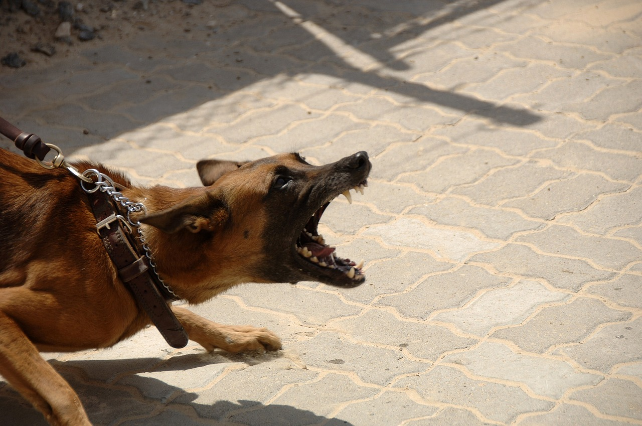 Net neutrality rollback is like unleashing an attack dog