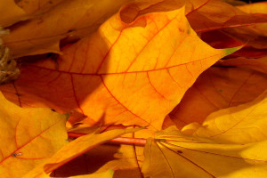 Orange leaves on ground